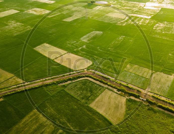 Paddy Field Drone Shot INDIA