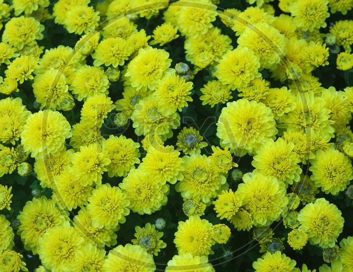 Closeup View Of Lovely Yellow Flower Against A Green Leaves Background