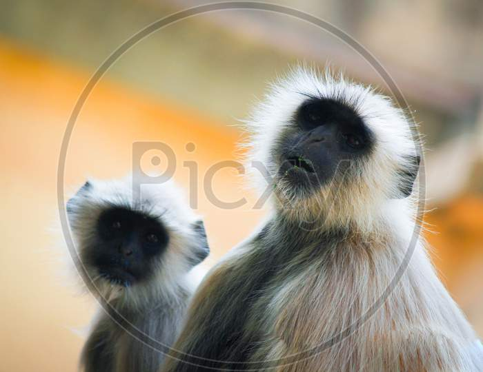 monkey mother love with fun