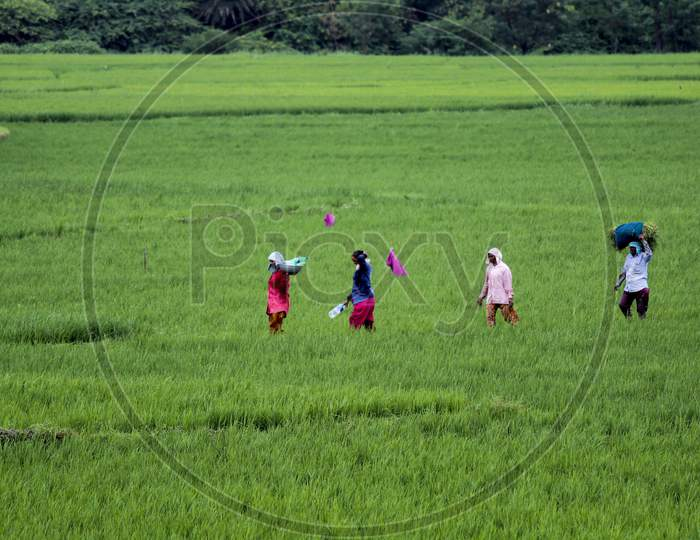 farmers returning from agriculture fields after work