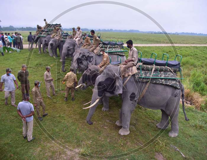 Elephants are lined up for tourists to ride after seven-month-long closure since March because of coronavirus lockdown  at the Kaziranga national park  in Golaghat District of Assam on Nov 1,2020