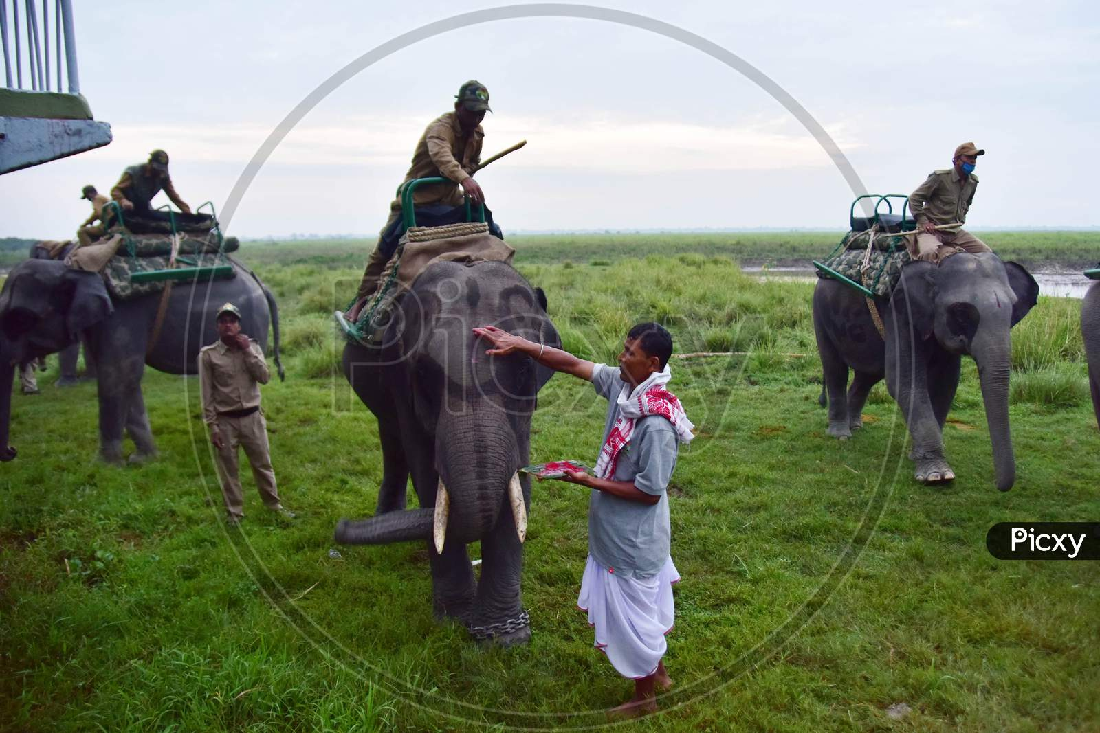 """A priest puts a """"tilak"""" on a elephant  before the start of an elephant safari at Kaziranga National Park in Assam after seven-month-long closure since March because of coronavirus lockdown  at the Kaziranga national park  in Golaghat District of Assam on Nov 1,2020"""