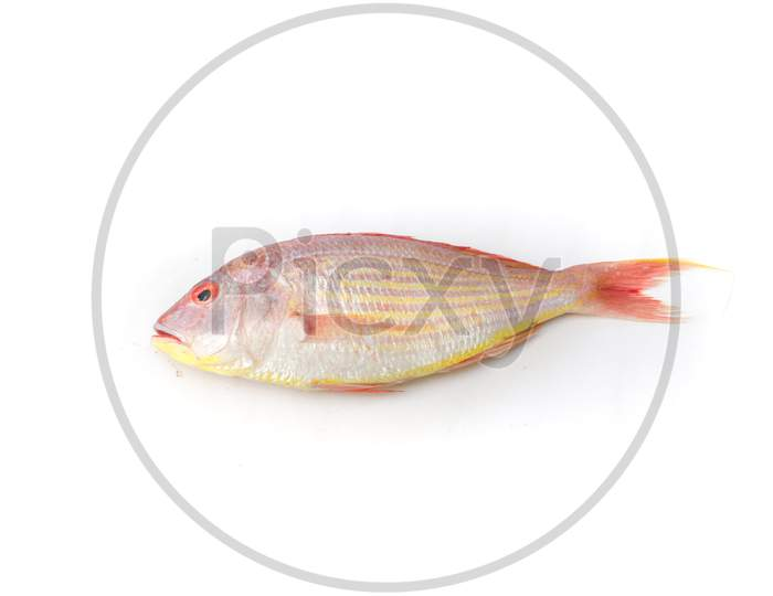 Close Up View Of Fresh Pink Perch (Thread Finned Bream) Isolated On White Background.