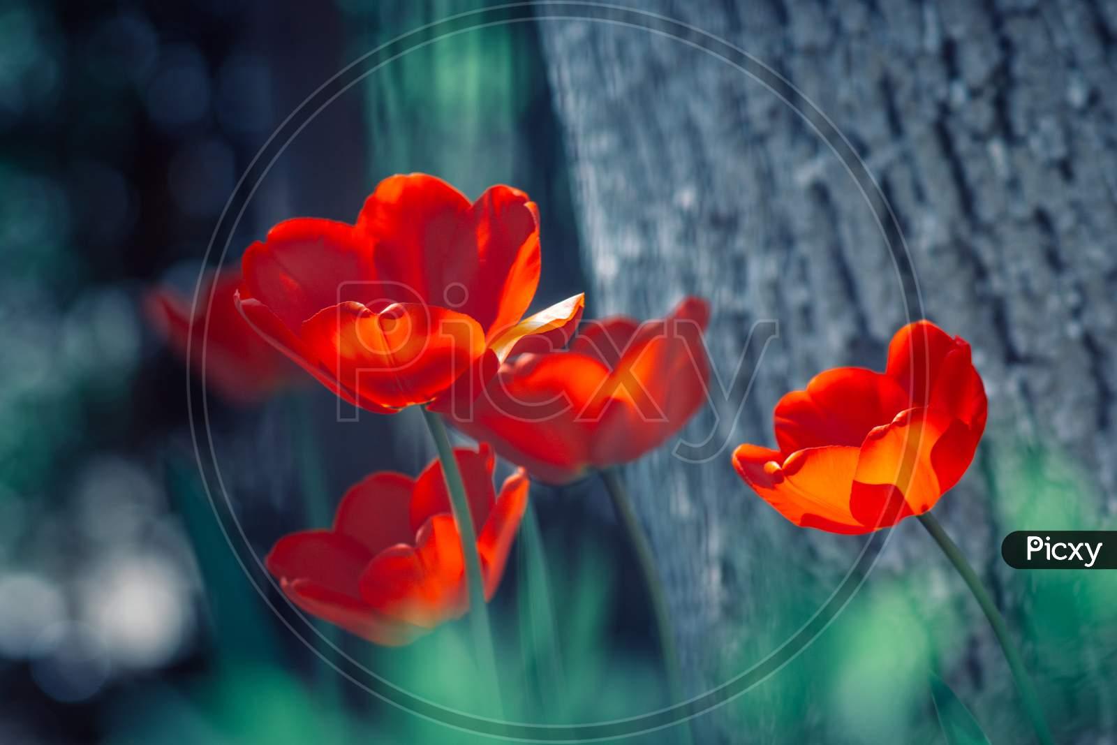 red petal Macro Photography