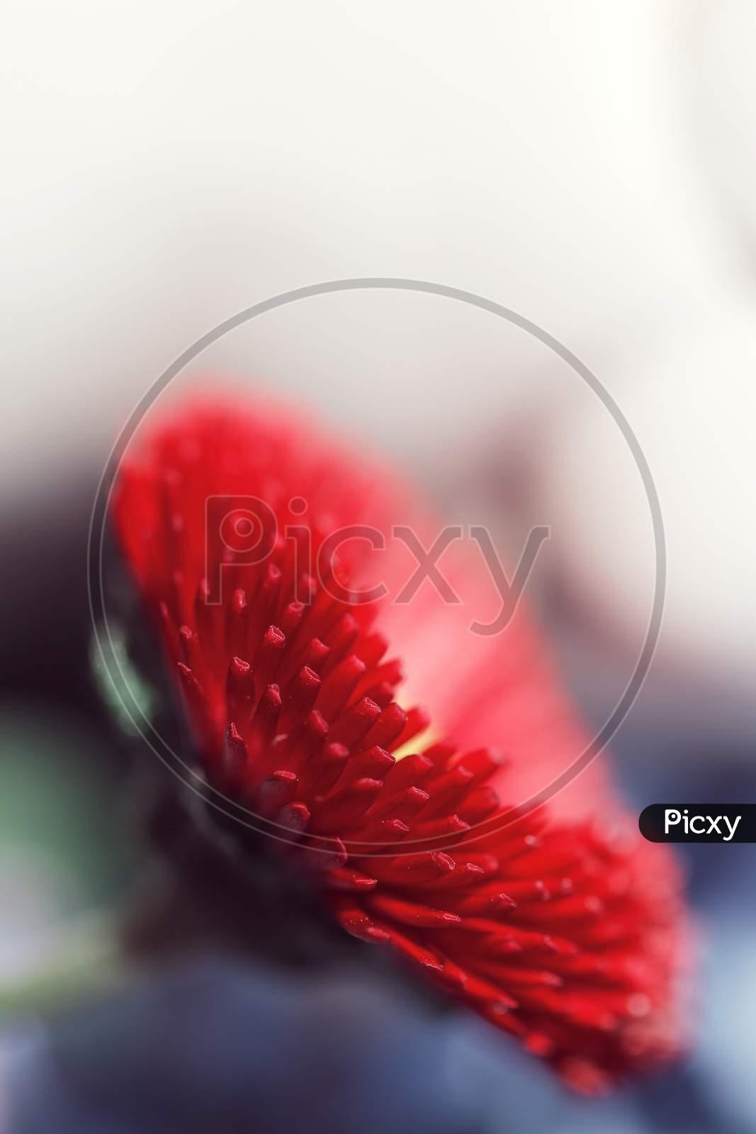 Macro Big Red FlowerNature Spring