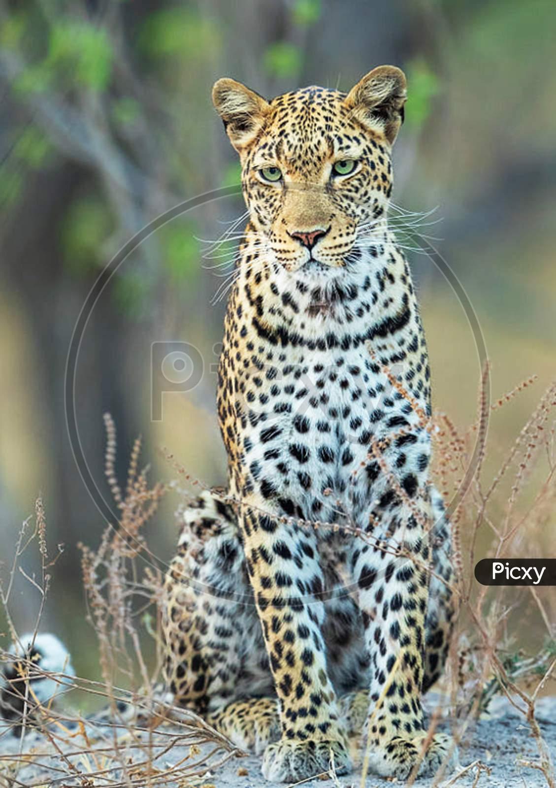 Beautiful wildlife pictures