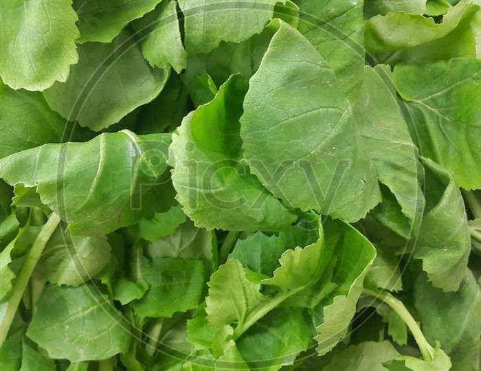 Lush Green Leaves Of Spinach