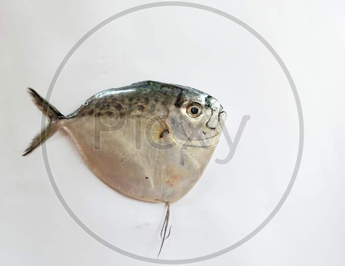 Fresh Razor Moonfish/Razor Trevally Fish Isolated On Whitebackground.