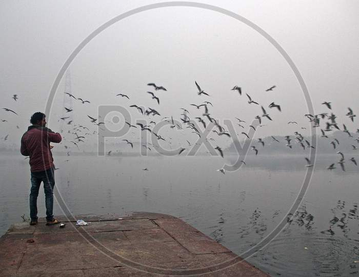A man feeds seagulls at the Yamuna river on a smoggy morning in New Delhi, November 9, 2020.