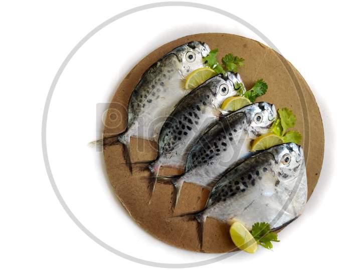 Fresh Razor Moonfish/Razor Trevally Fish, Decorated With Herbs And Lemon Slice On A Wooden Pad