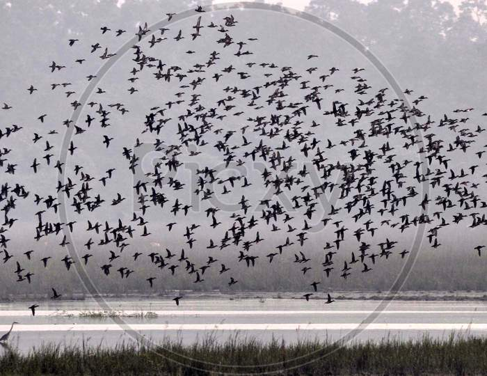 Migratory bird spotted at Pobitora Wildlife Sanctuary, in Morigaon district, northeastern state of Assam on Nov 7,2020.