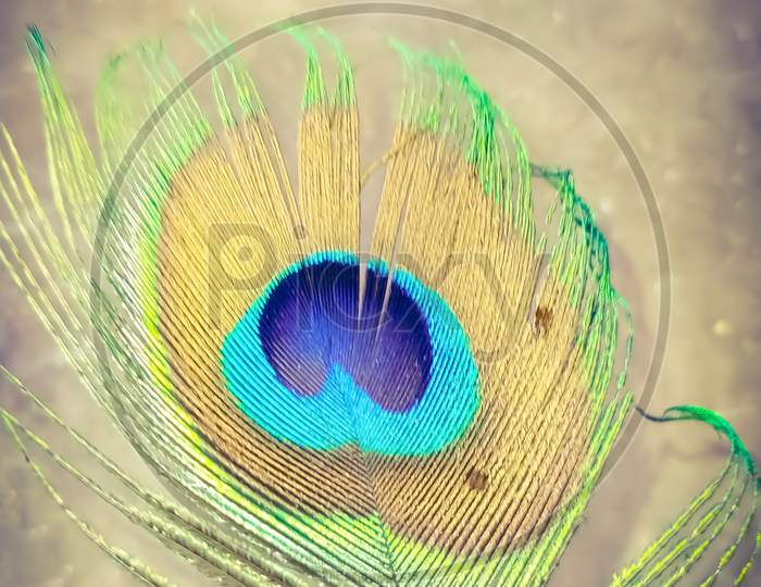 indian peacock colourfull feather white backgrounds indian peacock wings