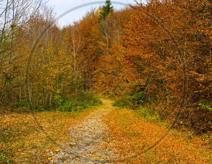 Autumn Country Road In The Forest