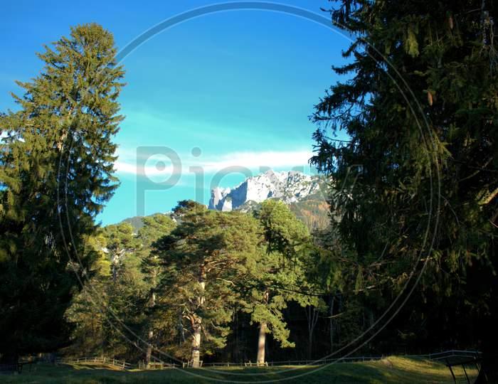 Colorful forest in Schaan in Liechtenstein 14.11.2020