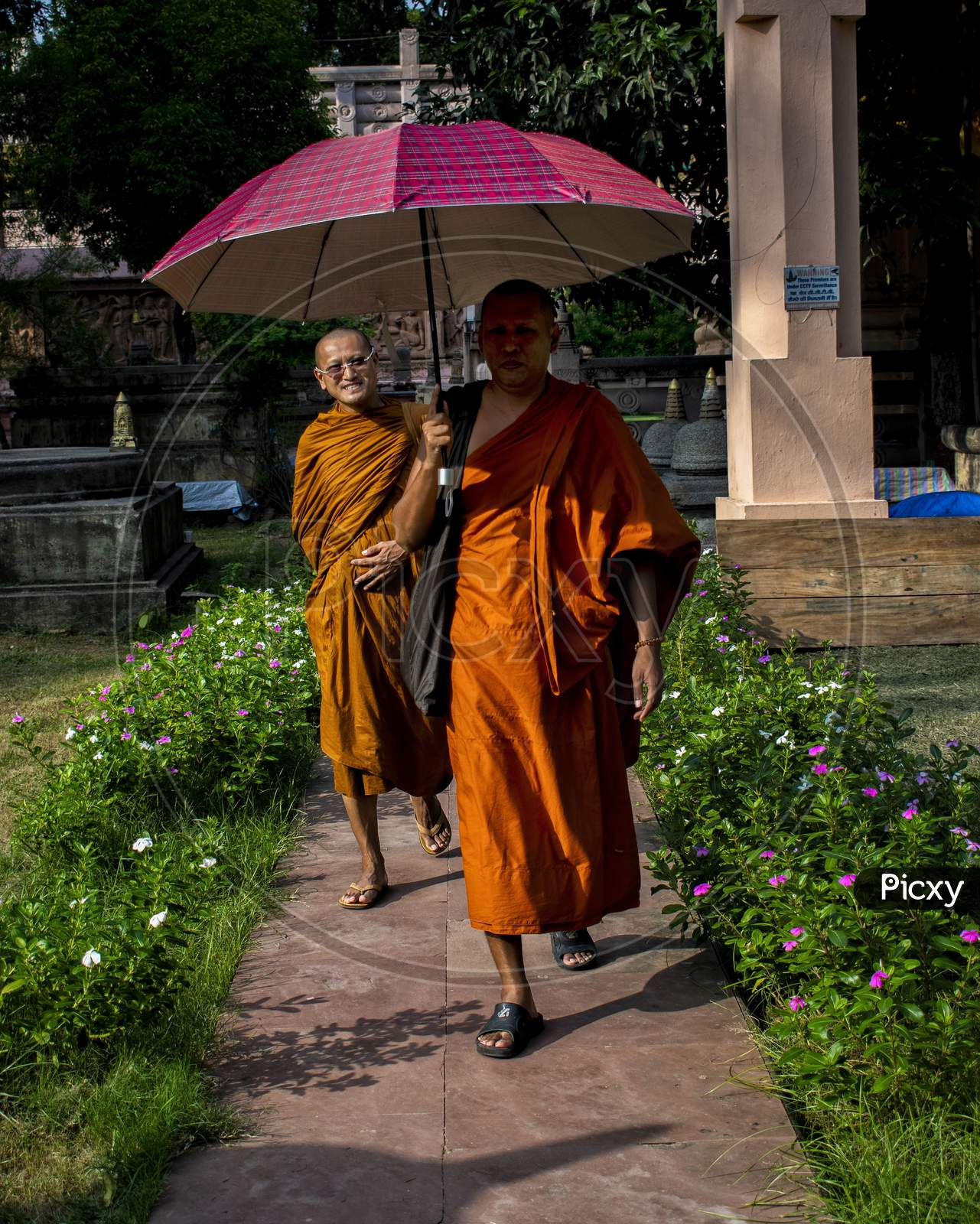 Buddhist Monk Holding Umbrella And Walking In a Pathway