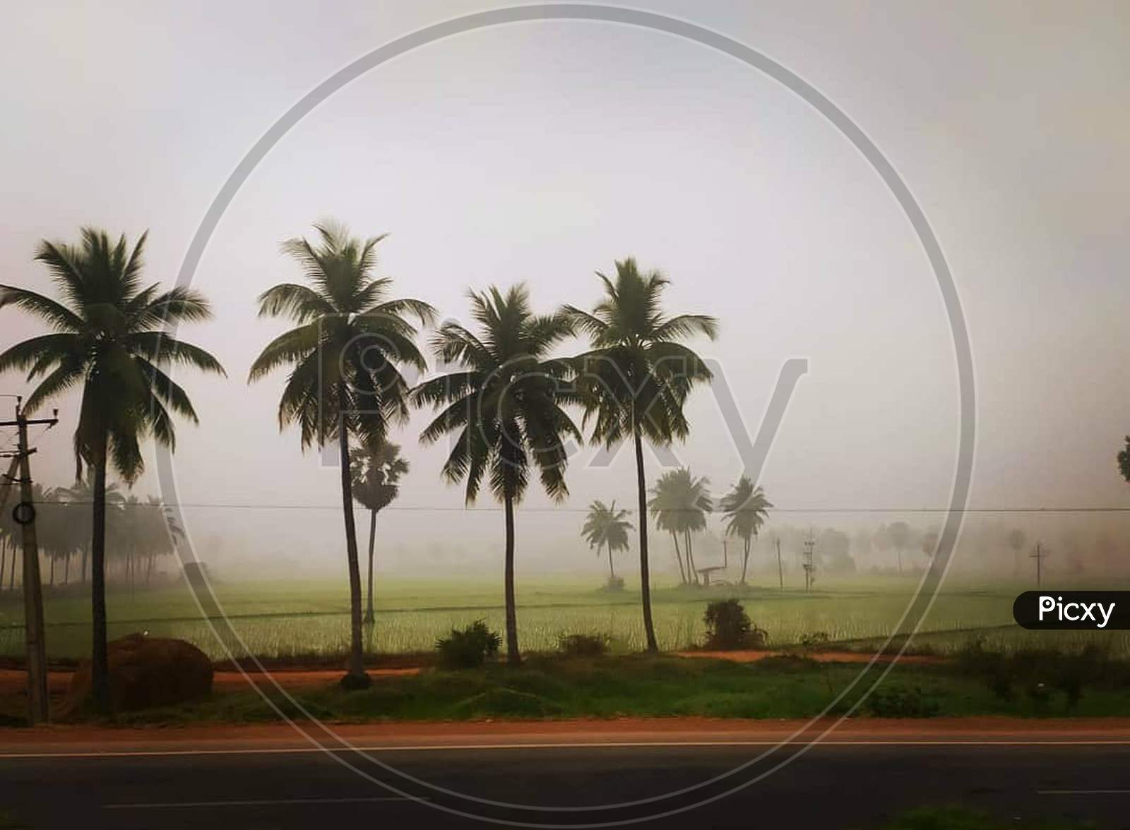 Foggy morning in village