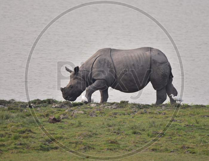 KAZIRANGA -WILDLIFE