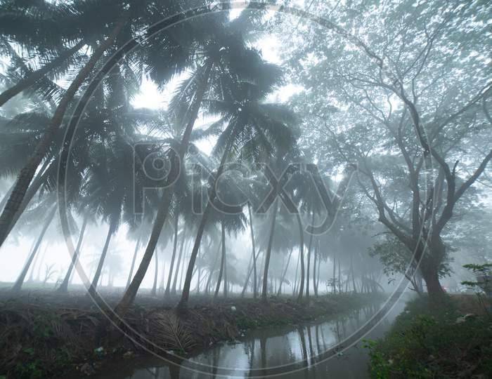 View of pond during a foggy morning in Palakollu
