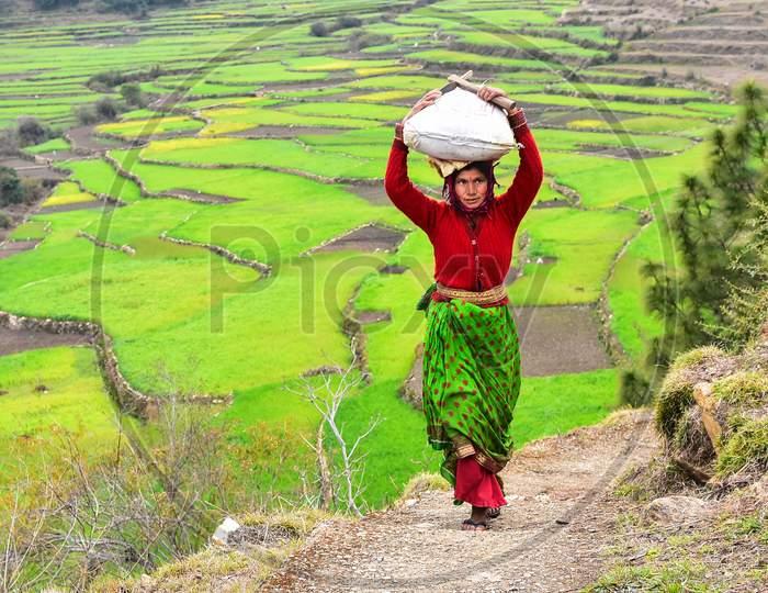 Indian Woman Farmer Taking Weight On Head At Terrain Places Of Kausani, Uttarakhand