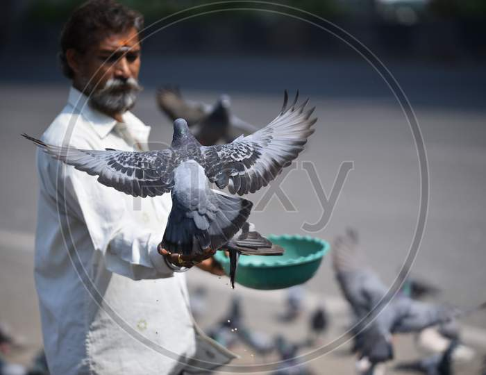 a man feeds pigeons