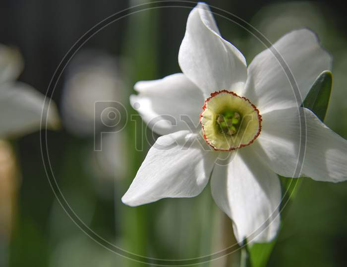 Flowers In The Garden Outdoor. Close-Up Photo. Nature In Details Concept.