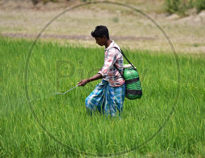 Farmer  Works At His Paddy Field During A Nationwide Lockdown Imposed In The Wake Of Coronavirus Pandemic At Sunaibali Village In Nagaon District Of Assam