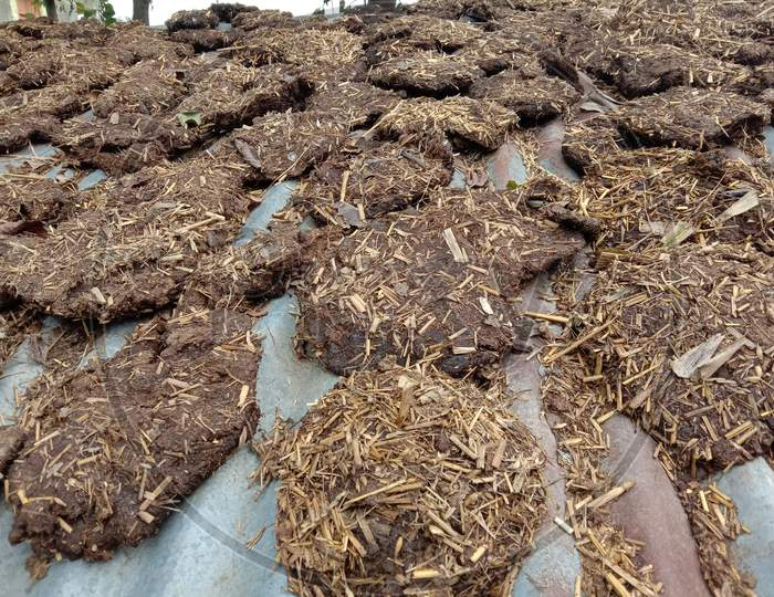 dung cakes production in an indian village.