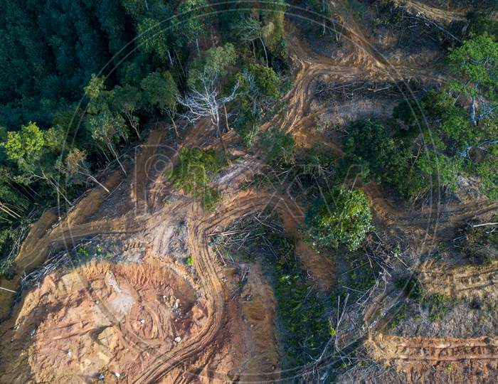 Aerial View Look Down Trees At Forest Is Cleared.