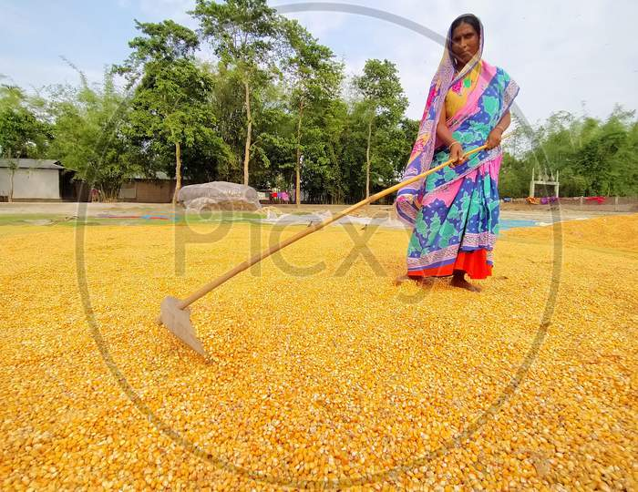 A Women  Spreads Maize Husks To Dry In A Field At Hajo In Kamrup District Of Assam On April 25,2020