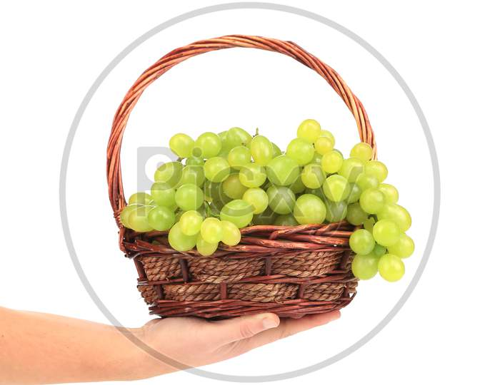 Green Ripe Grapes Basket In Hand. Isolated On A White Background.