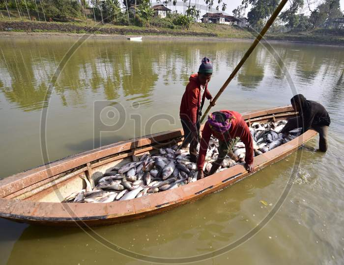 Villagers participate in a community fishing event as part of celebrations for the Bhogali Bihu, or the harvest festival of Assam, in Nagaon district, in the northeastern state of Assam