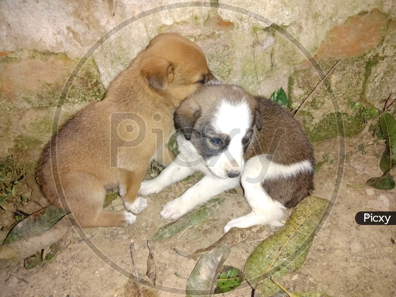Image Of Puppy Couple Puppy Ze875016 Picxy