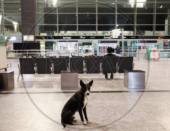 A dog sits in the arrival terminal of the Kempegowda International Airport in Bangalore, India, May 11, 2020. Three hundred twenty six passengers stranded in the UK due to the covid-19 lockdown arrived in an Air India flight at the break of dawn.