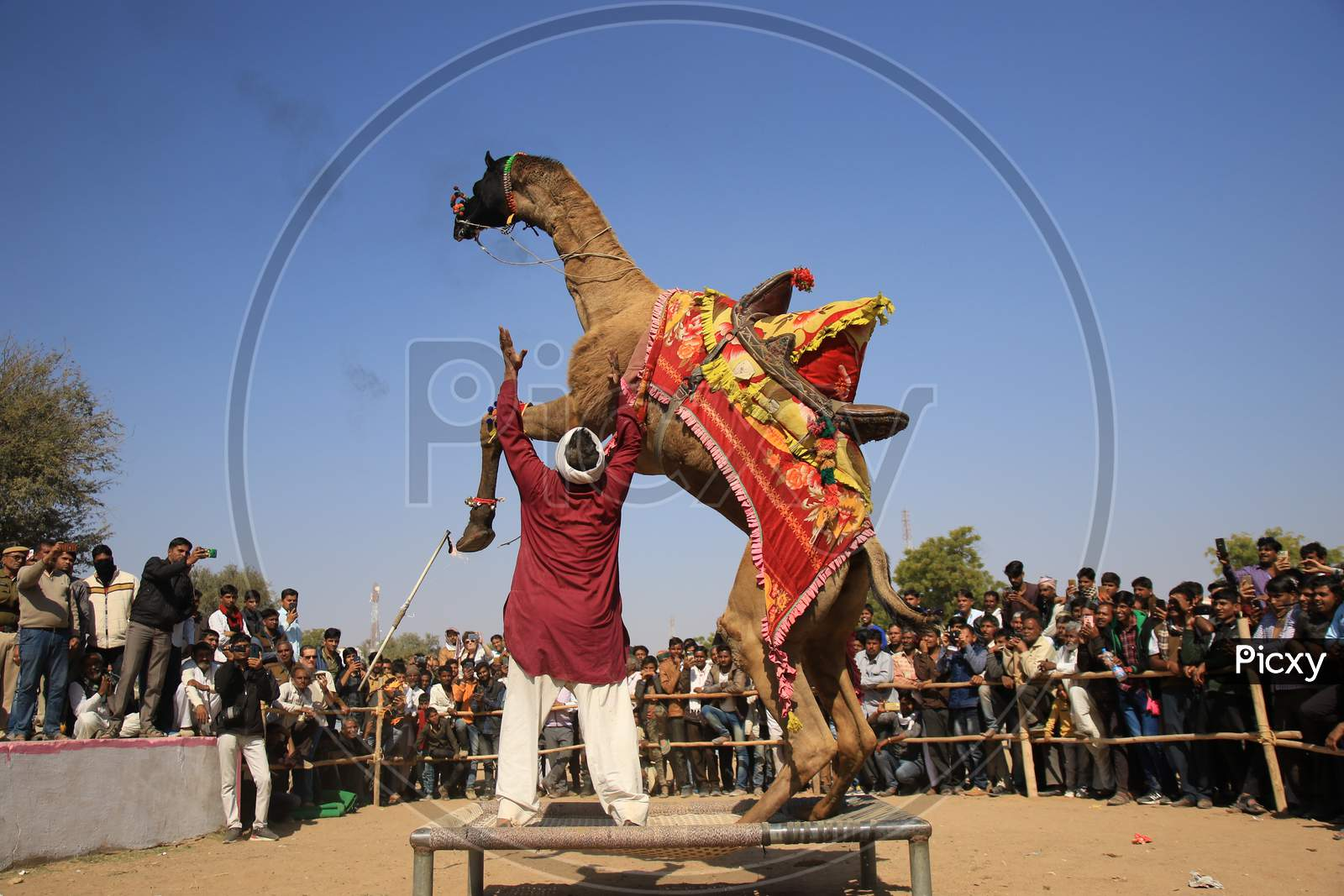 Nagaur Cattle Fair, Where Animals Like Camels, Cows, Horses And Bulls Are Brought To Be Sold Or Traded, In Nagaur District In The Desert State Of Rajasthan, India On 31 January 2020.