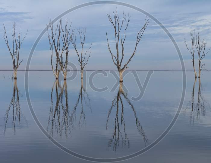 Dry Trees Submerged In The Lake. The Branches Without Leaves Are Reflected In The Calm Of The Water.