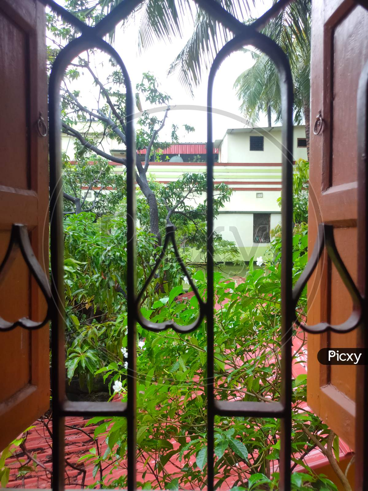 A Small Garden From A Window View During Amphan Cyclone