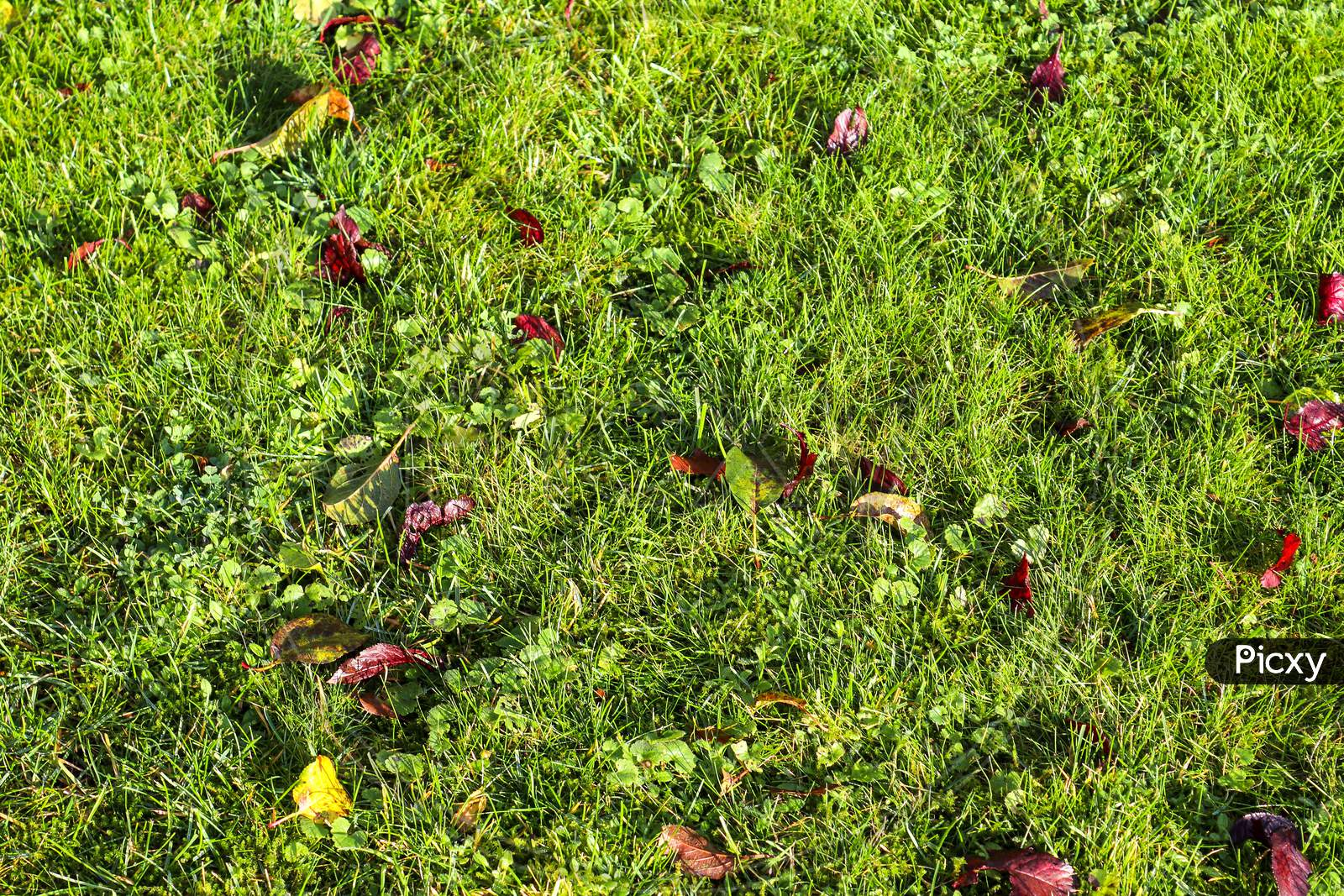 Close Up Surface Of Green Grass On A Meadow On A Sunny Summer Day
