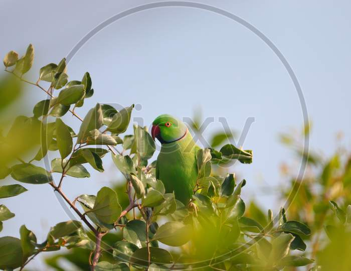 Parrot Sitting On Tree Branch