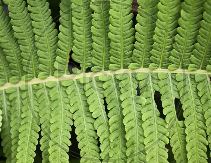 Beautiful close up of agricultural plants and leaves