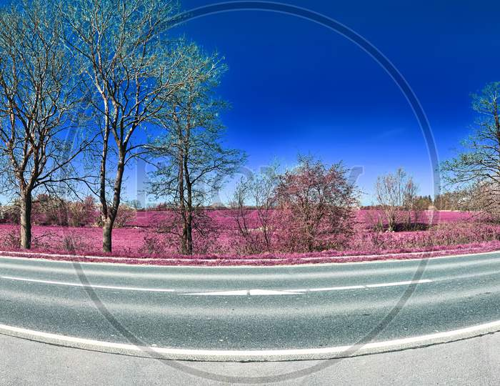 Beautiful pink infrared landscape panorama with a deep blue sky in high resolution