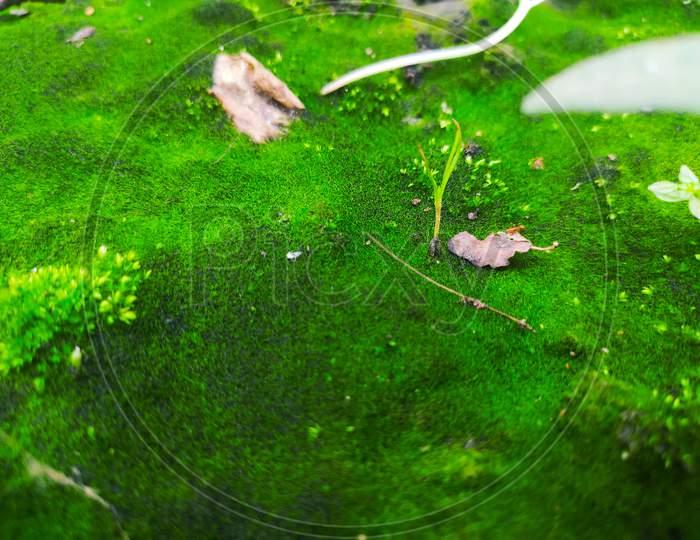 macro view of grass