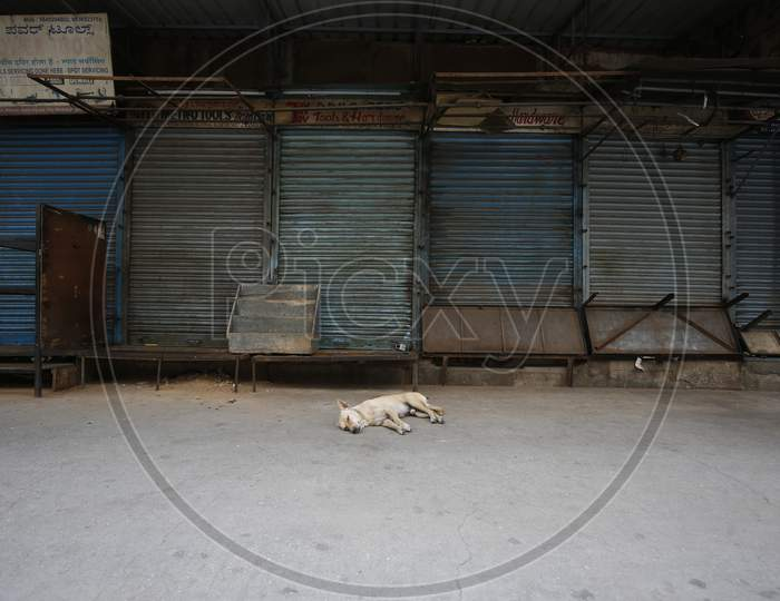 A dog sleeps outside shuttered shops in a market during the nationwide lockdown to stop the spread of Coronavirus (COVID-19) in Bangalore, India, May 01, 2020.