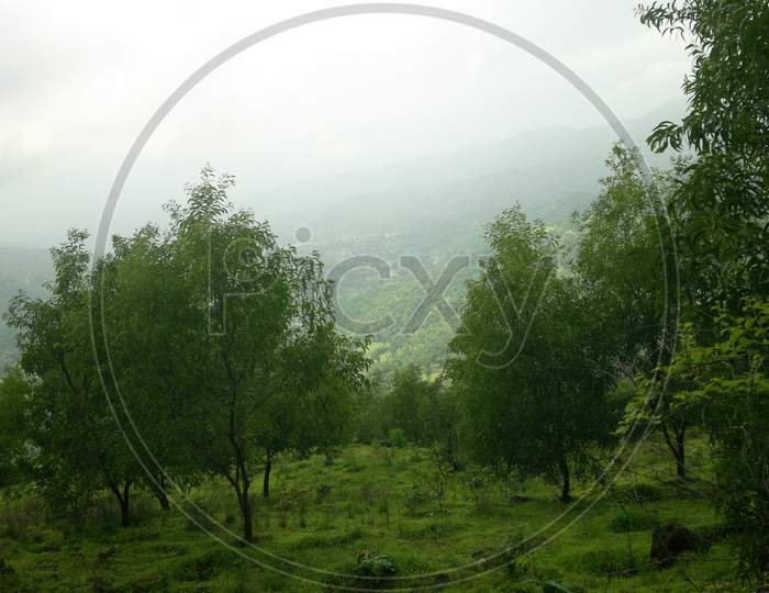 View Of Green Forest From Wilson Hills, A Hill Station In South Gujarat, India.