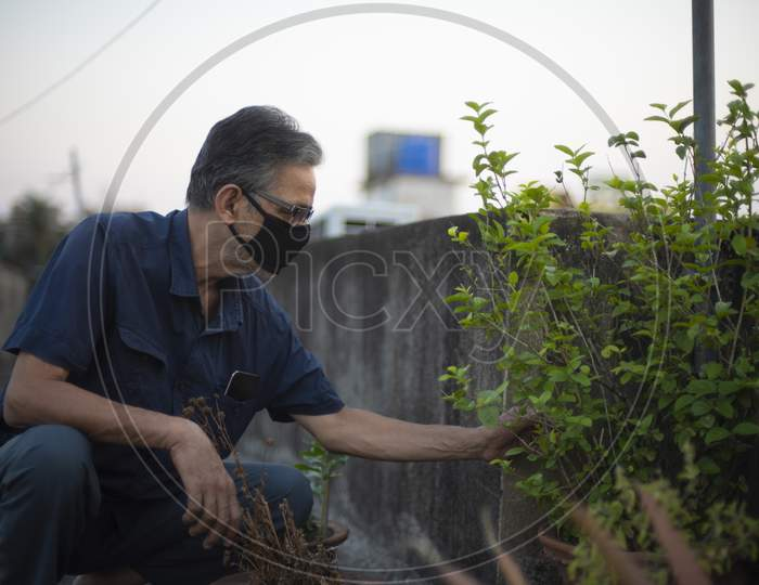 Portrait of an Indian old man wearing corona preventive mask gardening on the rooftop in home isolation. Indian lifestyle, disease and home quaratine.