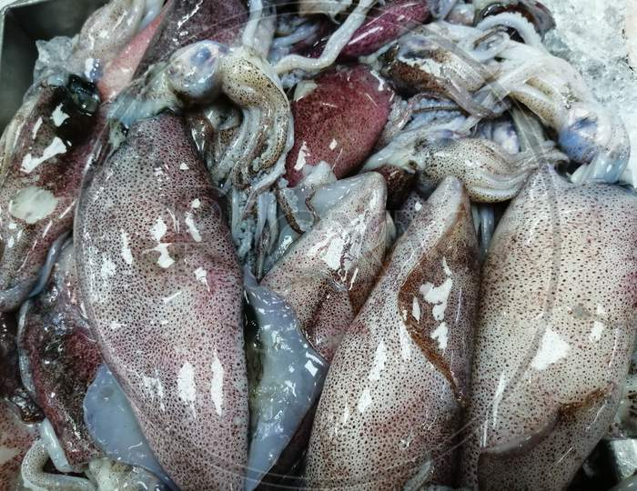 Fresh Squid Fish Which Is A Seafood Kept In Market For Sale