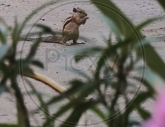 Squirrel, leaves, random click