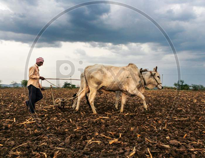 Farmer ploughing the field in Kharif