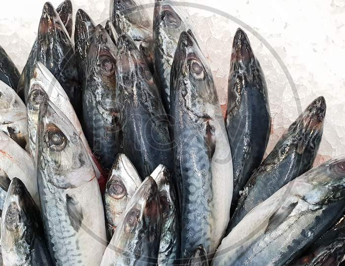 Mackerel On Ice In The Supermarket. Dead Raw Frozen Japanese Fish Called Saba For Cooking. Fresh Sea Saltwater Unpacking Scomber Fish With Nutrition And Omega 3 On Super Market Shelf For Nourish Brain