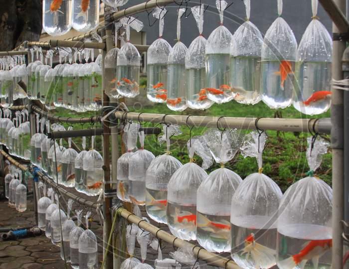 Orange Goldfish In Plastic Bags For Sale In Asia