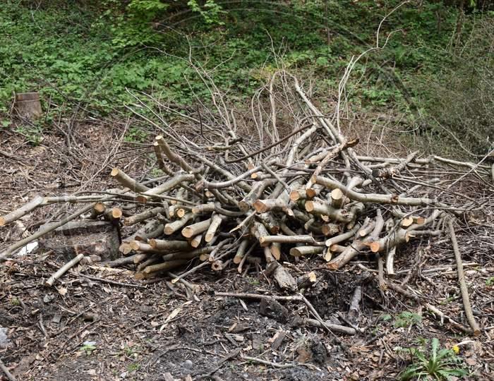 Staple of cut trees in a forest in Liechtenstein 24.4.2020